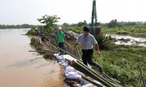 HẢI PHÒNG: vỡ 50m đê bao trong đợt mưa lũ lịch sử