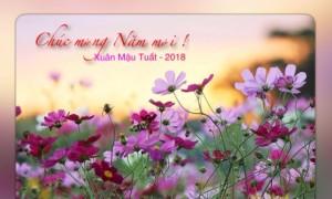 ALBUM: CHÀO XUÂN MẬU TUẤT 2018 - Ảnh: Ninh An, Hà Nội