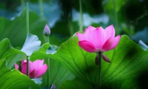 LỜI NÓI - Thơ: Bình Nguyễn