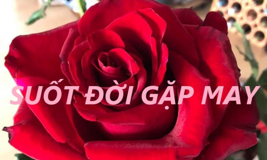 SUỐT ĐỜI GẶP MAY