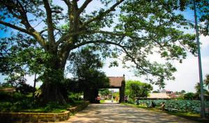 QUÊ HƯƠNG - Thơ Đông Hà, Hà Nội