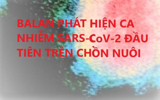 BALAN PHÁT HIỆN CA NHIỄM SARS-CoV-2 ĐẦU TIÊN TRÊN CHỒN NUÔI