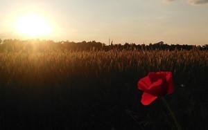 DỊCH COVID-19: WHO CẢNH BÁO CAMPUCHIA BÊN BỜ VỰC THẢM KỊCH